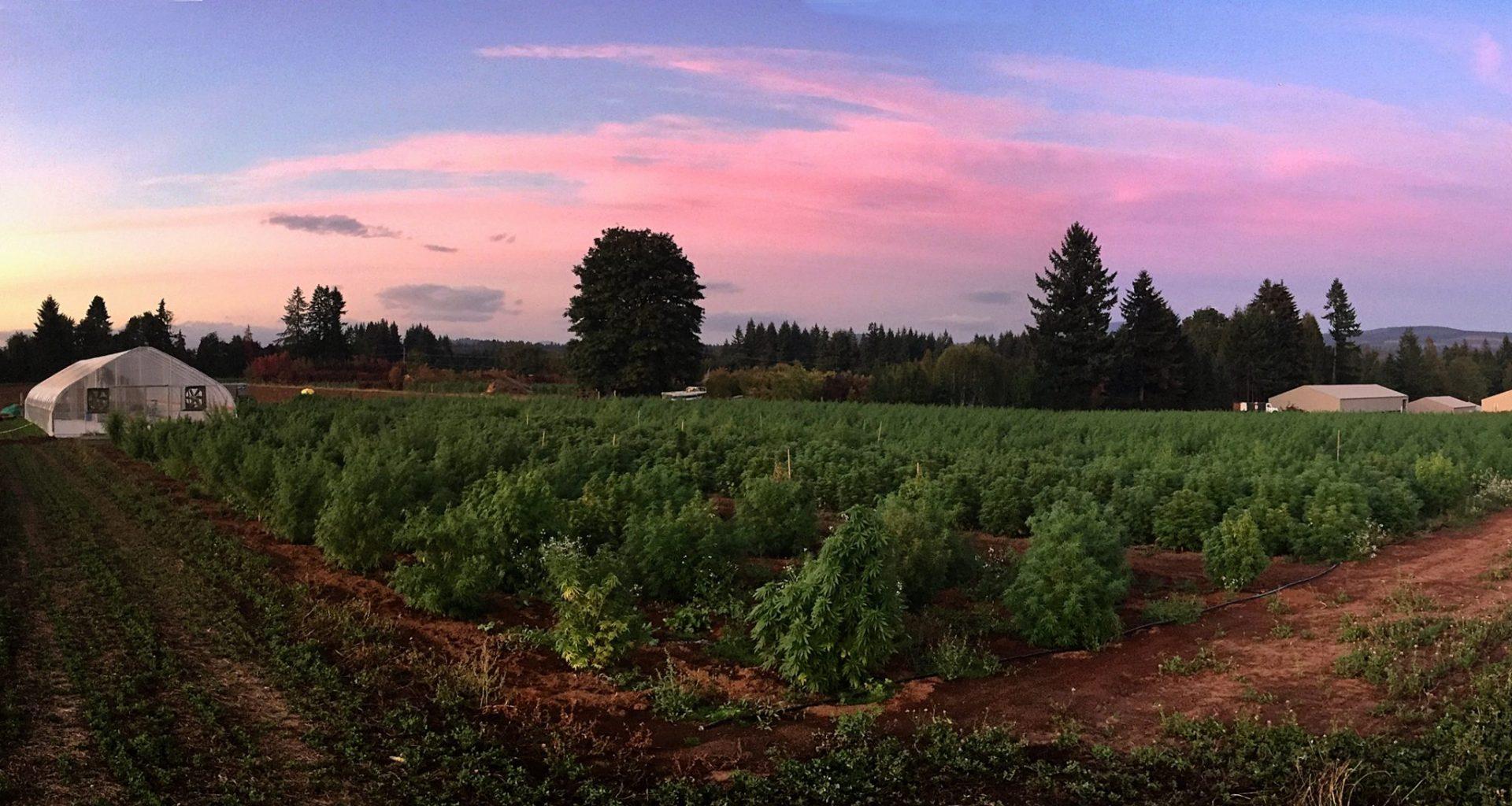 boring oregon CBD hemp farm