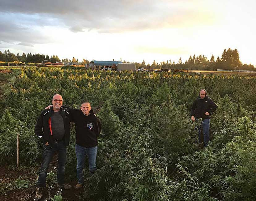 US hemp and CBD farms