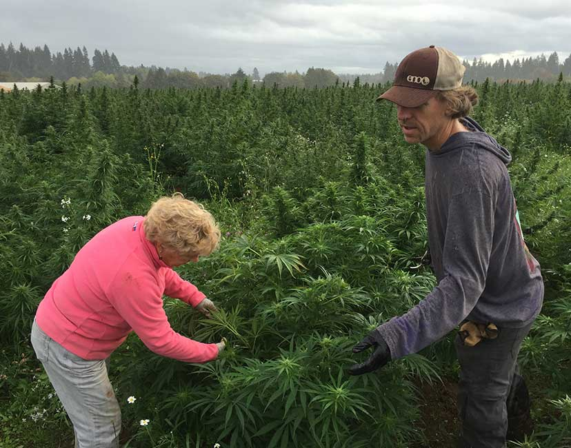 growing hemp for health and wellness
