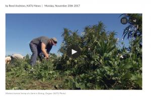 KATU2 TV news article - Hemp CBD oil farming