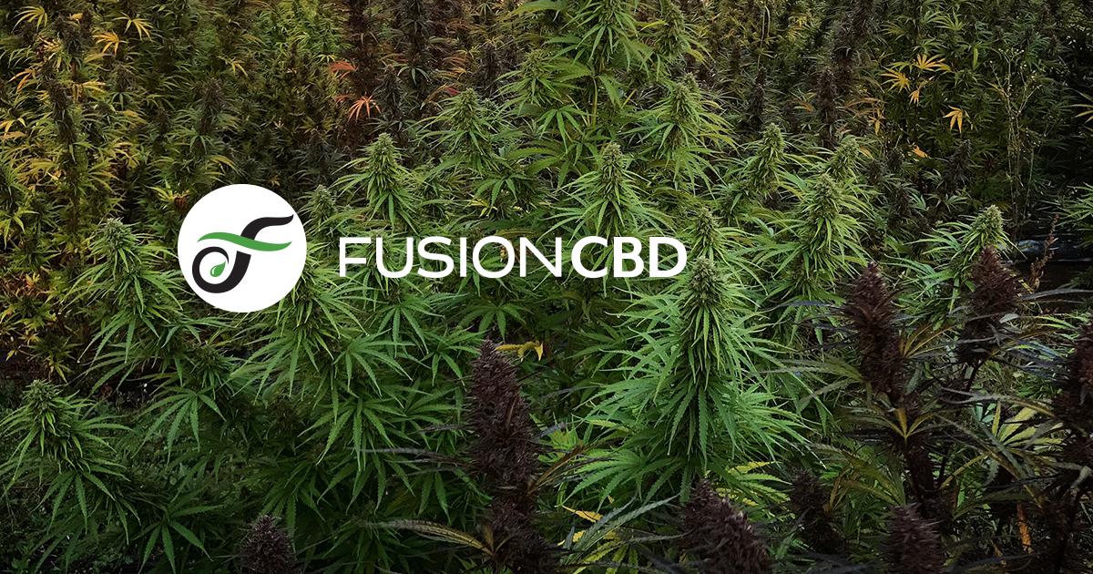 CBD Tinctures + Healthy Hemp Products | Fusion CBD