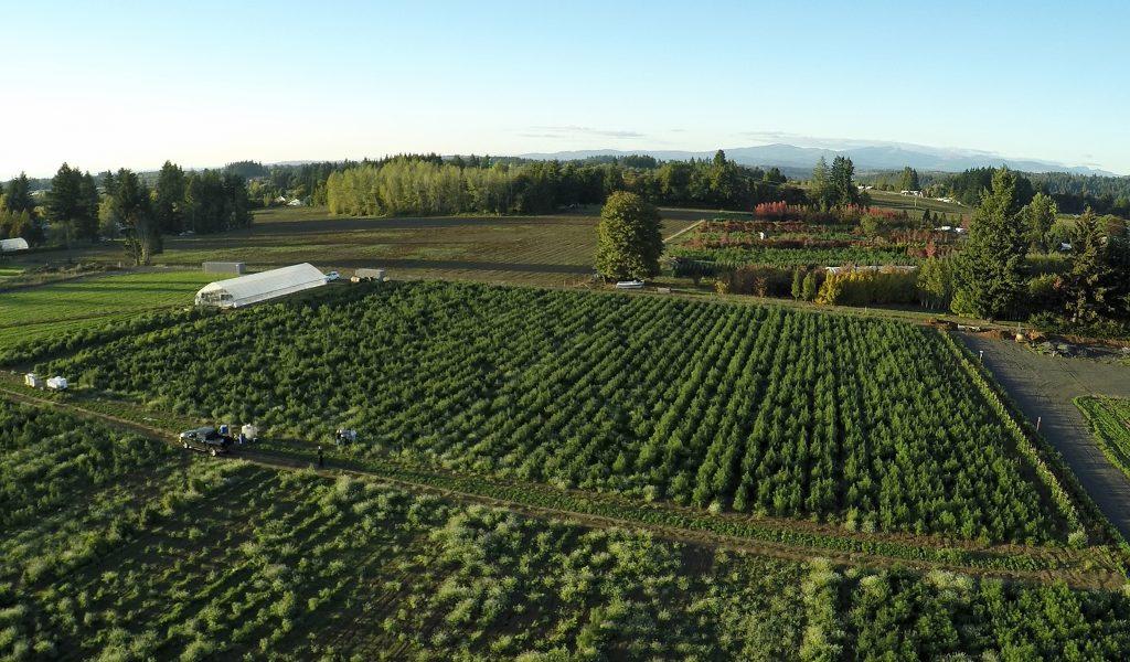 Fusion CBD hemp farm