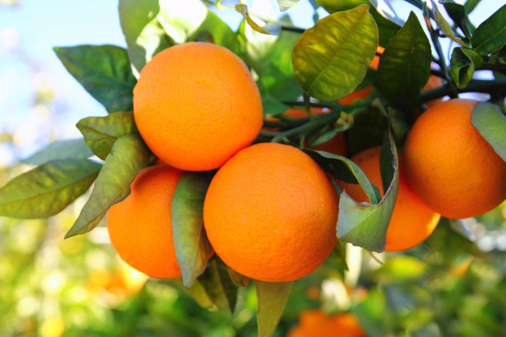 CBD terpenes valencia oranges